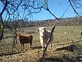 06065 Passignano sul Trasimeno, Province of Perugia, Italy - panoramio (20).jpg