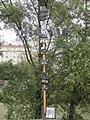 1090 Rossauer Lände - Summer Stage - Skulpturengarten Phantasie - Energie - Skulptur Fernbedienung von Christian Eisenberger IMG 0001.jpg