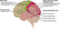 1604 Types of Cortical Areas-02.jpg
