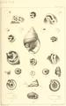 1863 BostonJournal NaturalHistory v7 illus1.png