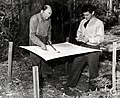 1945. W.J. Buckhorn (left) and R.L. Furniss examining hemlock looper collecting tray. Clatsop County, Oregon. (32661428570).jpg