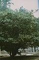1999 Schloss Pillnitz 16.jpg