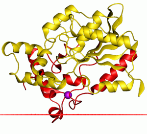 Alpha/beta hydrolase superfamily - A bacterial lipase, one of this family members