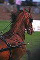 2009 Shelbyville Horse Show (3868246094).jpg