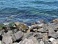 20140612 Nesebar 015.jpg