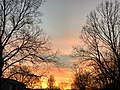 2020-12-15 17 01 21 Sunset with high cirrostratus viewed through the bare canopies of American Sycamores along Tranquility Court in the Franklin Farm section of Oak Hill, Fairfax County, Virginia.jpg