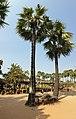 20200217 100545 Peasants producing palm sugar and palm liquor near Nyaung U Myanmar anagoria.jpg
