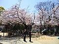 2 Chome Nakasakurazuka, Toyonaka-shi, Ōsaka-fu 561-0881, Japan - panoramio - yokoyokoi (6).jpg