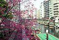 2 Chome Nihonbashibakurochō, Chūō-ku, Tōkyō-to 103-0002, Japan - panoramio.jpg