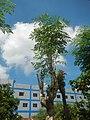 3428Poblacion, Baliuag, Bulacan 56.jpg