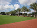 4th City Park NOLA Great Lawn Palms.JPG