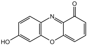 Litmus - Chemical structure of 7-hydroxyphenoxazone, the chromophore of litmus components