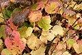 74.DullesCorner.HerndonVA.28October2012 (8138450205).jpg