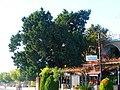 A@a near kathikas village paphos cy. - panoramio (4).jpg