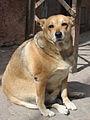 Image Result For Beagle Dog