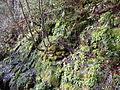 AUT 1926 ForestWander.JPG