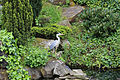A Grey heron on Crematorium pond at the City of London Cemetery 04.jpg