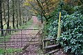 A Walk in the Woods - geograph.org.uk - 291311.jpg