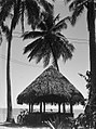 A fale underneath coconut palms (AM 76017-1).jpg