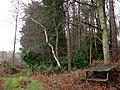 A mossy track - geograph.org.uk - 639284.jpg