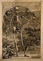 A skeleton, front view, standing with left arm extended, in Wellcome V0008384.jpg