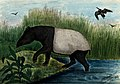 A tapir coming out of a river onto the shore. Coloured repro Wellcome V0020794.jpg