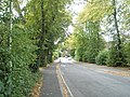 A verdant Airlie Road - geograph.org.uk - 1548564.jpg