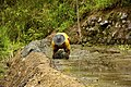 A worker maintaining the wall of a rice terrace near Banaue.jpg