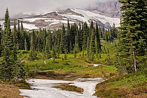 Cascades (ecoregion) - Scattered patches of subalpine fir grow below  glaciers and permanent snowfields on the south slope of Mount Rainier in ecoregion 4d.
