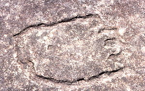 Terrey Hills, New South Wales - Image: Aboriginal rock carvings, Terrey Hills, New South Wales, Sydney Wiki 0160