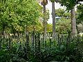Acant als jardins del Real de València.JPG
