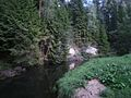 Ahja river, Valgemetsa.JPG