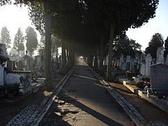 A narrow walking path shaded by trees with rows of graves on either side