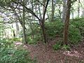 Alloway Motte and Court Hill, Ayr, South Ayrshire, Scotland. Site of ditch.jpg