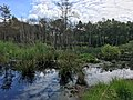 Altwarmbüchener Moor Juni 2017 02.jpg