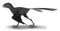 Ambopteryx restoration.png