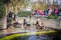 Amsterdam Zoo (8698448514).jpg