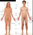 Anatomické zobrazení.png