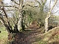 Ancient track, near Little Silver - geograph.org.uk - 1625991.jpg