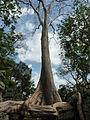 Angkor - Ta Prohm - 011 Tree Rising (8581939524).jpg