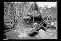 Animais em Terreno Inundado Pelo Rio Madeira - 913, Acervo do Museu Paulista da USP.jpg