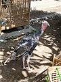 Animal Market Yogya Java344.jpg