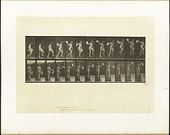 Animal locomotion. Plate 96 (Boston Public Library).jpg