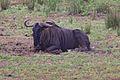Animals at Pilanesberg National Park 9.jpg