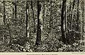 Annual report (1909) (14728744446).jpg