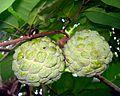 Anona squamosa fruit.JPG