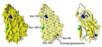 Antithrombin - 500px