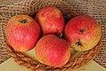 Apfel 123 Rheinischer Bohnapfel (fcm).jpg