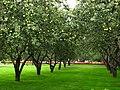 Apple orchards in Kolomenskoye 21.JPG