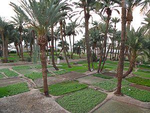 Aqaba Garden